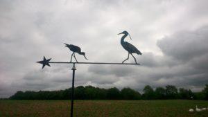 Oiseaux-du-marais-300x169